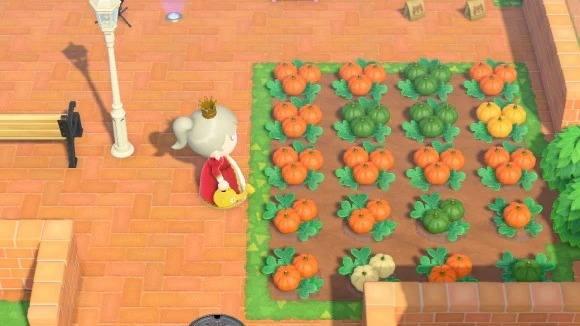 かぼちゃ(2回目)