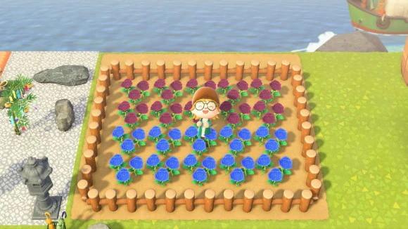 グラデーション花畑