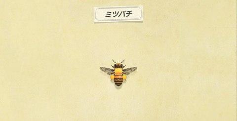 ミツバチの値段と捕まえ方│時間・レア度