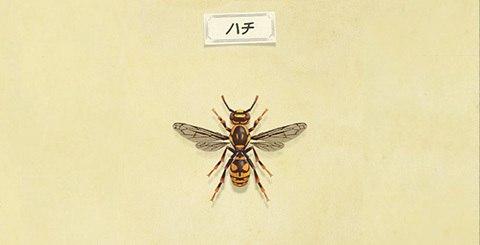 ハチの値段と捕まえ方│時間・レア度