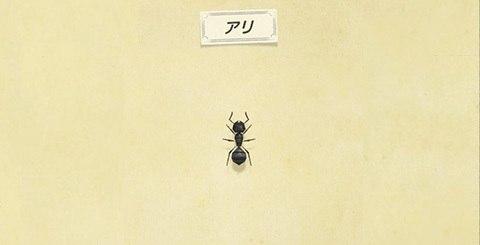 アリの値段と捕まえ方│時間・レア度