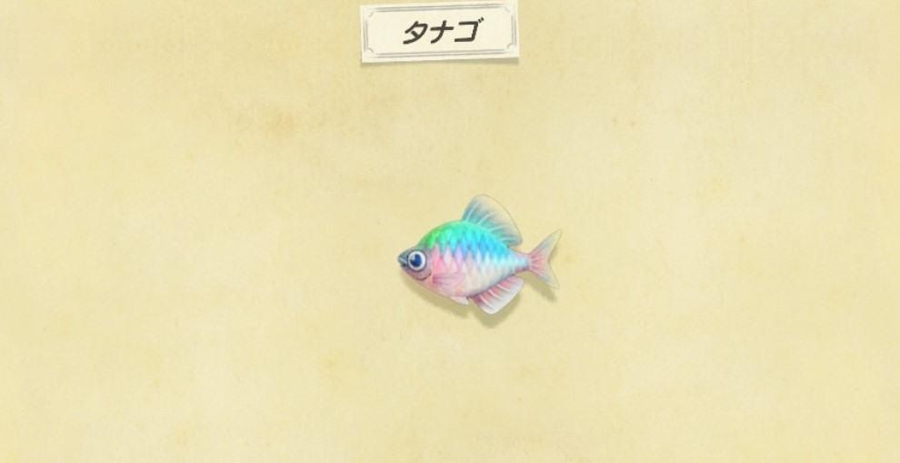 タナゴの出現時間と値段・釣り方