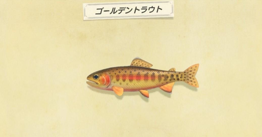 ゴールデントラウトの魚影と釣り方|釣れない方必見