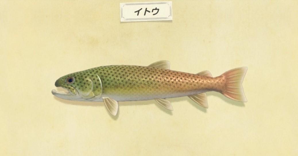 イトウが釣れない方必見|釣れる時間と魚影の大きさ
