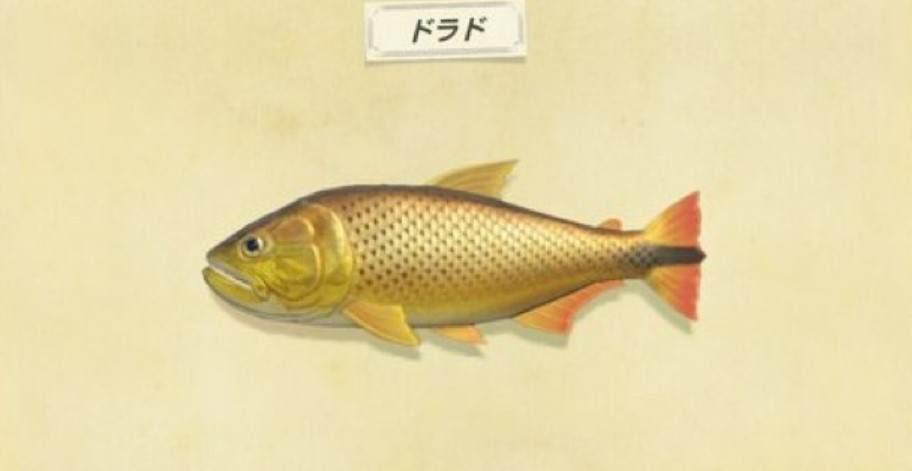 ドラドの値段と釣り方|ドラド島の行き方