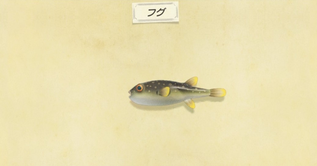 フグの出現時間と値段・釣り方