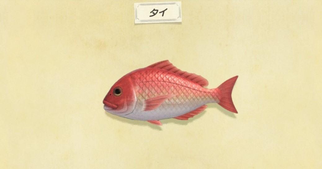 タイの出現時間と値段・釣り方