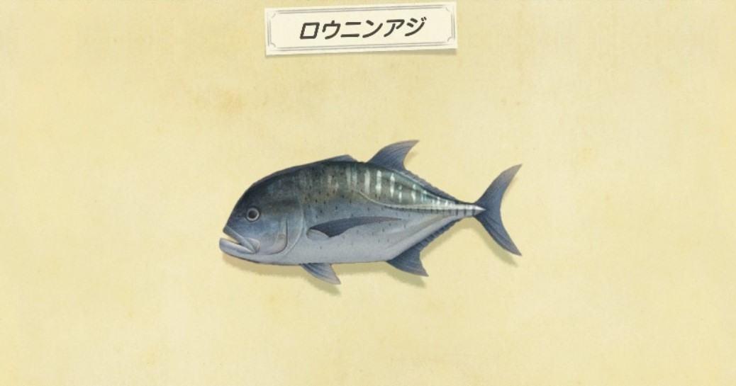 ロウニンアジの値段と出現時間・釣れる場所