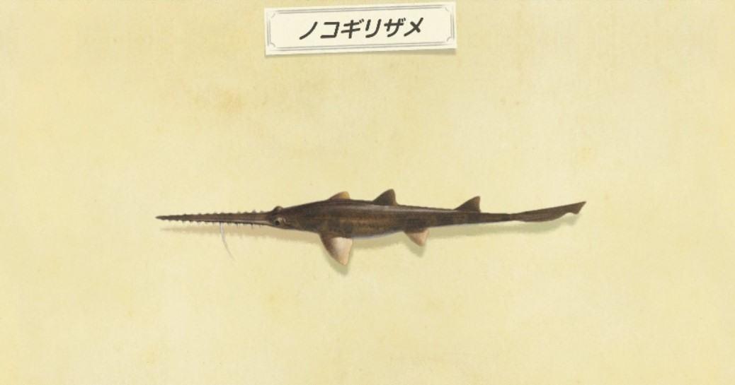 ノコギリザメの出現時間と値段・釣り方