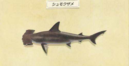シュモクザメの出現時間と値段・釣り方
