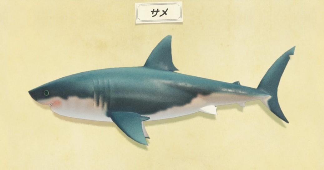 サメの出現時間と値段・釣り方