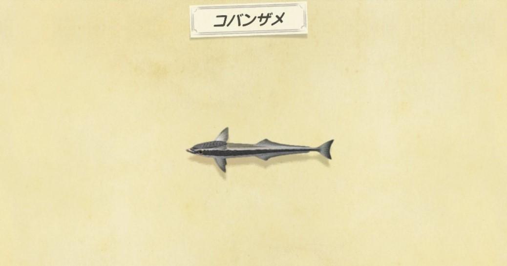 コバンザメの出現時間と値段・釣り方