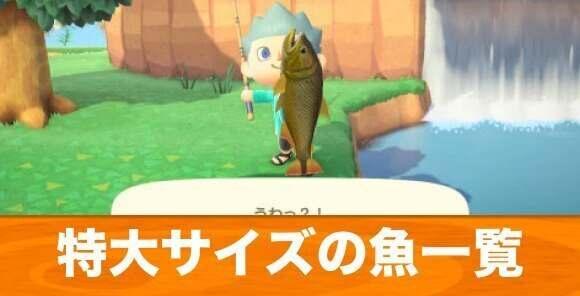 特大(LL)サイズの魚一覧|値段と入手場所
