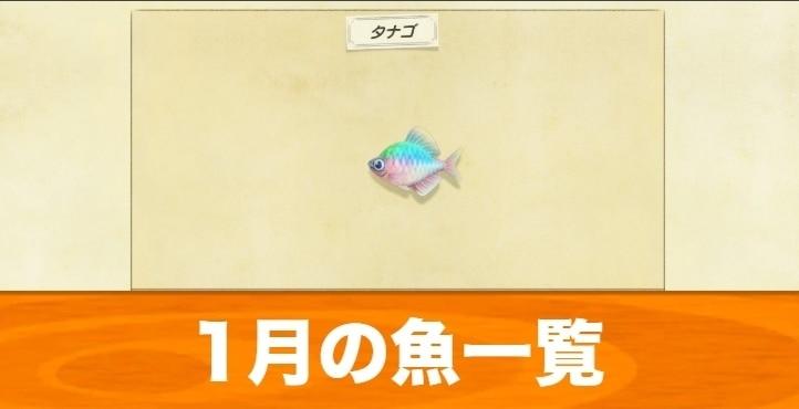 1月の魚一覧|値段と入手場所