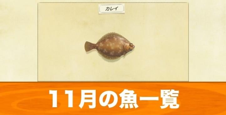 11月の魚一覧|値段と入手場所