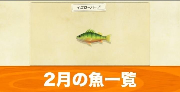 2月の魚一覧|値段と入手場所