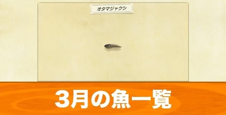 3月の魚一覧|値段と入手場所