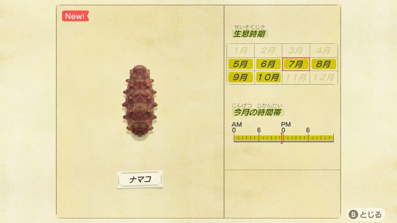 ナマコの値段と捕り方|時間・時期