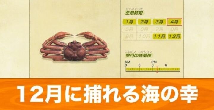 12月に捕れる海の幸一覧|値段・泡の量・魚影