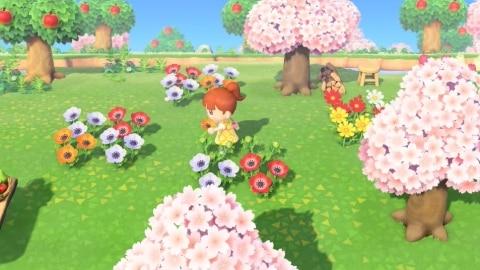 花びらだけ摘む