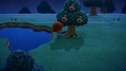 の 森 伐採 どうぶつ