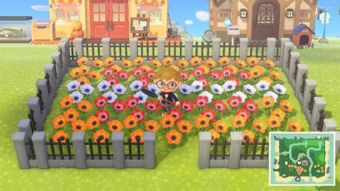 交配を考えた花畑