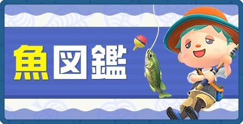 魚図鑑一覧|値段・時間・魚影
