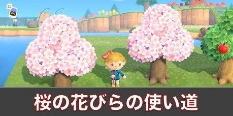 さくら(桜)のはなびらの使い道と集め方