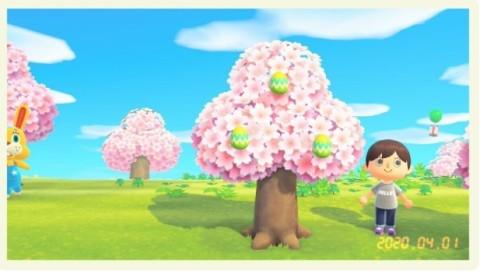 卵の入手方法の1つ、木に生える卵