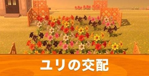 花 の 交配 あつ 森