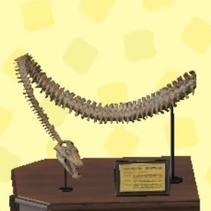 フタバサウルスのあたま