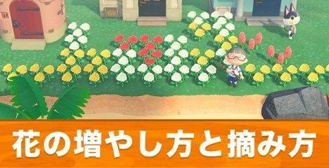 花の増やし方と摘み方|増えすぎた花はどうする?