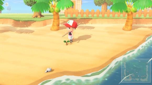 低木は砂浜で育たない