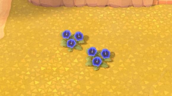 青色同士を交配