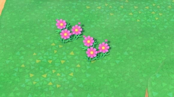 ピンクのコスモスの交配