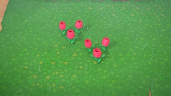 ピンクのチューリップの交配