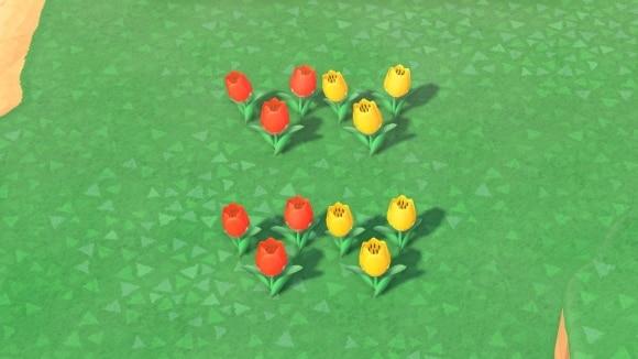 赤と黄色のチューリップの交配