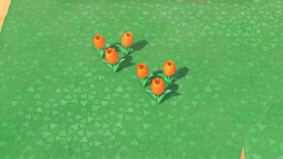 オレンジのチューリップの交配