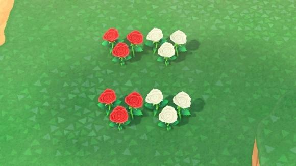 赤と白のバラの交配