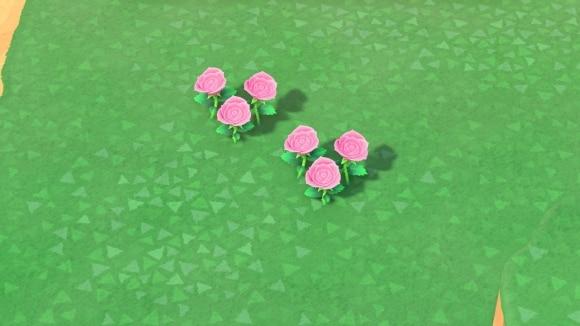 ピンクのバラの交配