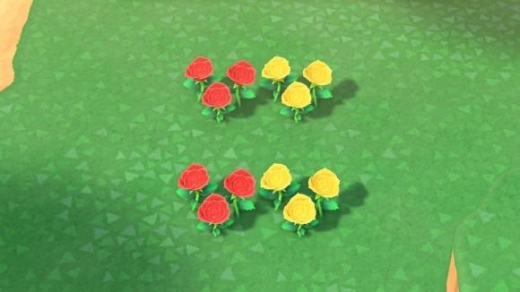 赤と黄色のバラの交配