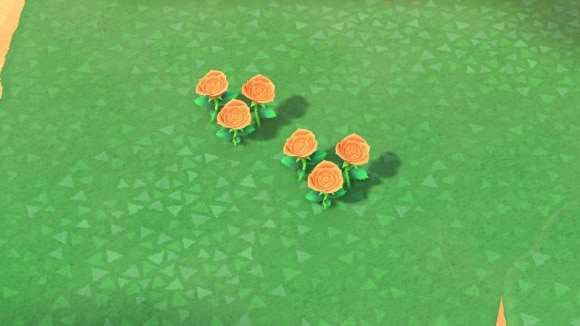 オレンジのバラの交配