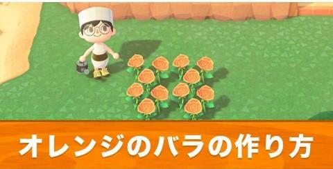 オレンジのバラの作り方と交配手順