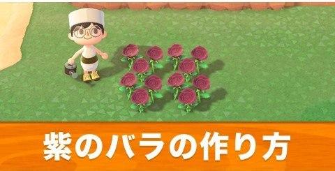 紫のバラの作り方と交配手順