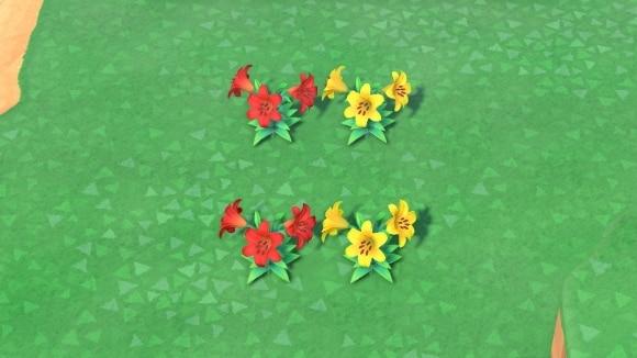 赤と黄色のユリの交配