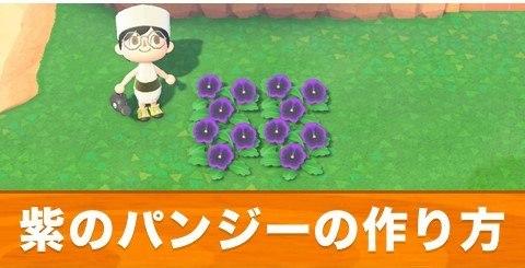 紫のパンジーの作り方と交配手順
