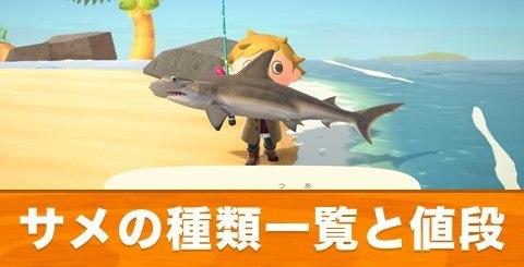 サメの種類一覧と値段