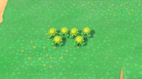 緑のキクの交配