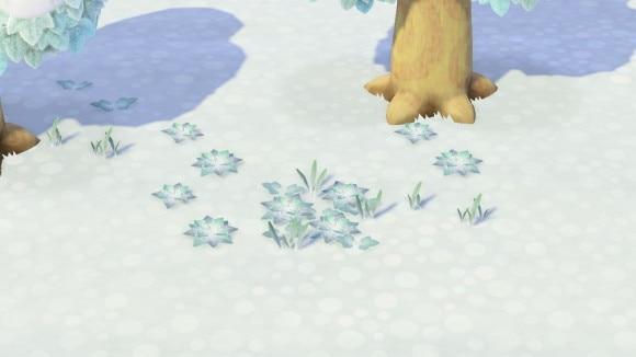雑草冬(雪)