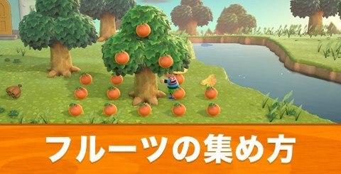 フルーツの集め方